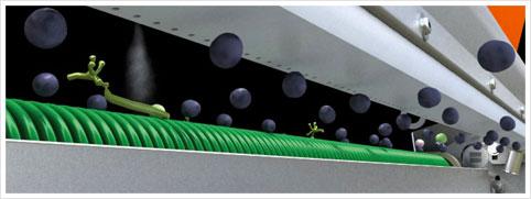 Seleccionadora de uva