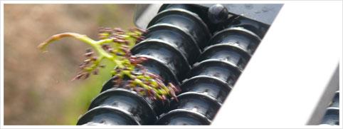 Desgranadora de uva - Selectiv' proccess Winery